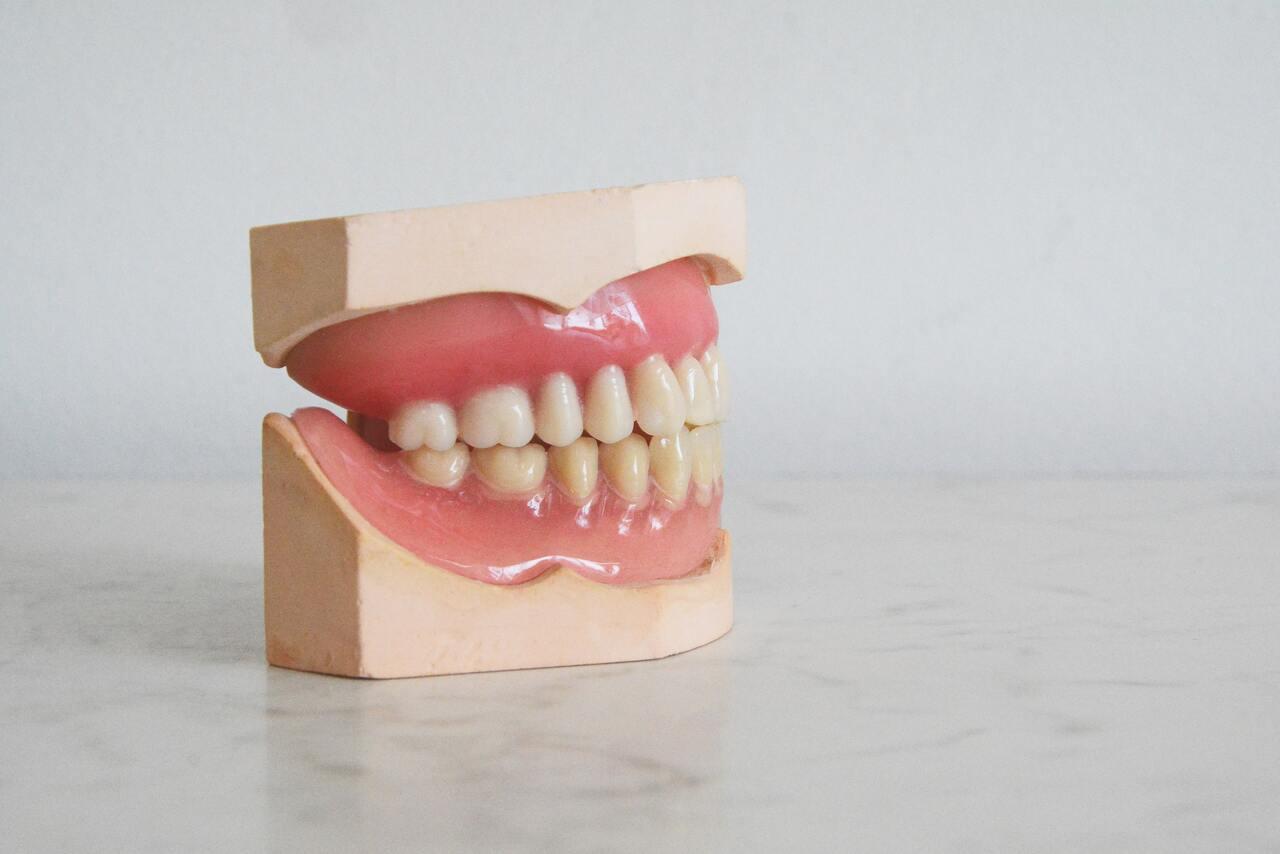 mammifero con piu denti